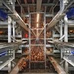 Il Regolamento UE 2019/268 e gli aggiornamenti sulle modalità di campionamento nell'ambito del Piano Nazionale di Controllo delle salmonellosi negli avicoli