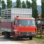 Corso di formazione per conducenti e guardiani di veicoli stradali che trasportano animali