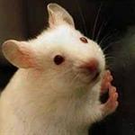 L'ATTIVITÀ DEL SERVIZIO IAPZ NEGLI IMPIANTI DI ALLEVAMENTO E FORNITURA DI ANIMALI UTILIZZATI AI FINI SCIENTIFICI