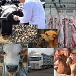 COVID-19: nuove indicazioni per le attività di Sanità Pubblica Veterinaria e Sicurezza Alimentare