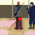 Attività formativa e divulgativa effettuata dal Servizio Sanità Animale dell'AV3 per le aziende del settore zootecnico