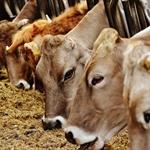 Piano nazionale alimentazione animale - PNAA 2018 - 2020