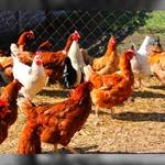 Nota P.F.VSA Prot.B/2-20/0002700 del 23/03/2018 Influenza aviaria