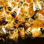 Nota P.F.VSA Prot.B/2-27/0003697 del 23/04/2018 Malattie delle api