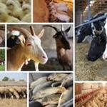 Decreto Dirigente P.F. VSA n.83 del 09/05/2019 Segnalazione Certificata di inizio Attività degli stabilimenti del settore alimentare primario