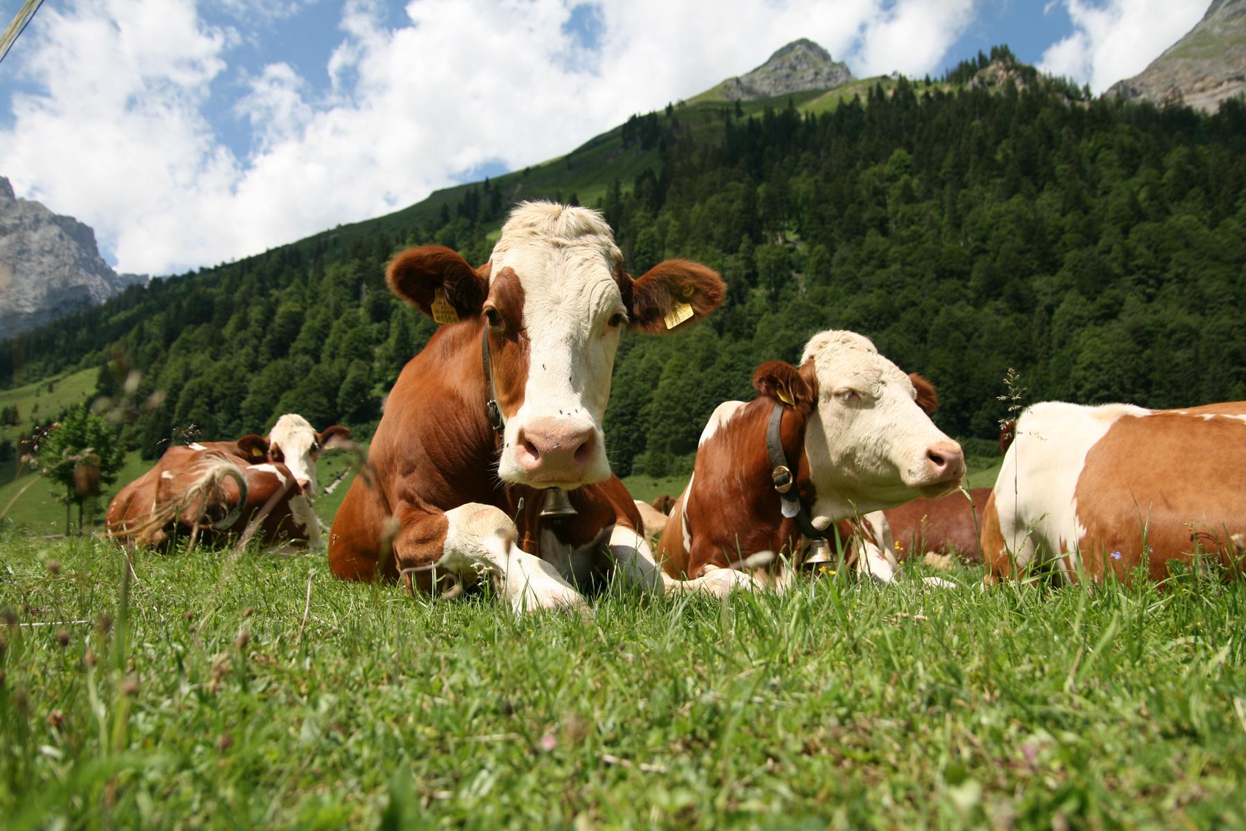 Il Benessere Degli Animali Da Reddito Al Macello Vesa